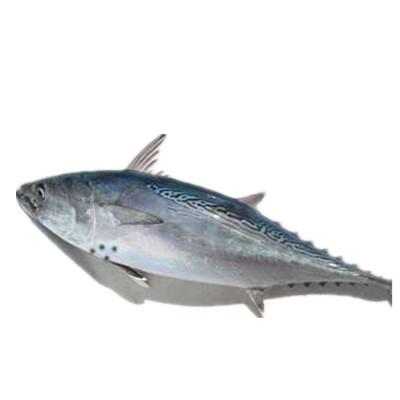 Binito Tuna
